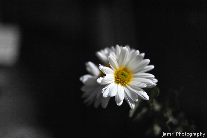A flower in the dark.