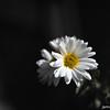 A flower in the dark.