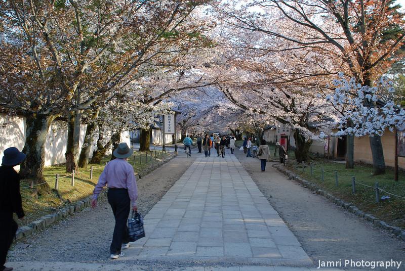 Sakura Avenue.<br /> A couple of days too late.