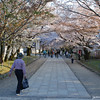 Sakura Avenue.<br /> A couple of days too late.