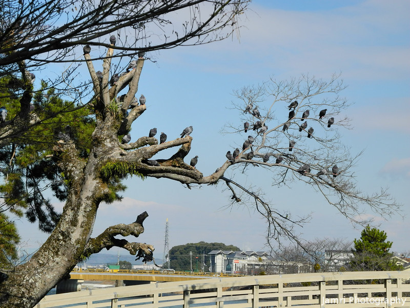 Lots of Pigeons in a Tree.