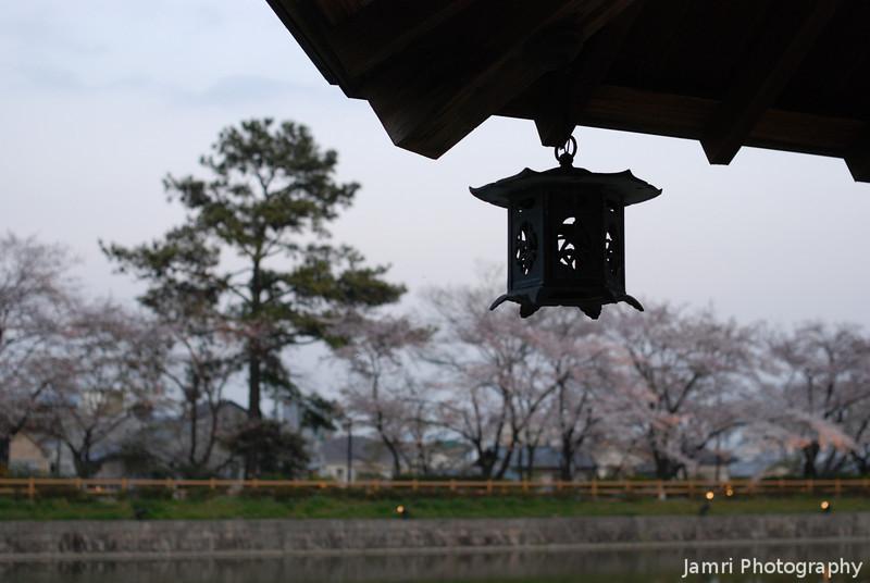 Little Lantern and Sakura.