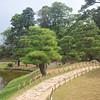Pine Trees.<br /> In Genkyu-en, Hikone, Shiga Prefecture, Japan.