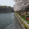 Sakura petals in the moat.<br /> At Osaka Castle.