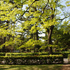 A Peaceful Place to Relax.<br /> The Kyoto Imperial Palace Park is one of the best places I know of in Kyoto to just go and relax and enjoy the clean air.