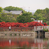 Towards the Bridge.<br /> During Azalea season at Nagaoka Tenmangu Shrine Park.