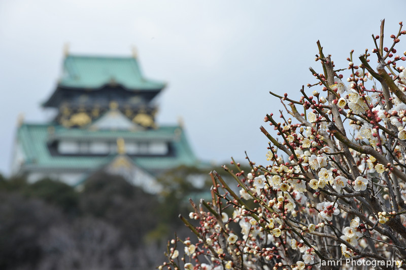 The Castle and Ume.