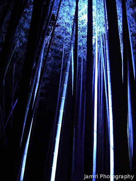Blue Lit Bamboo.<br /> I liked these blue lit ones because it kind of looked like they had snow on them. However, some Japanese people I spoke to there said that the blue ones looked spooky!