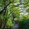 A Shady Path.<br /> That leads to a preserved old house in Kamigamo, Kyoto.
