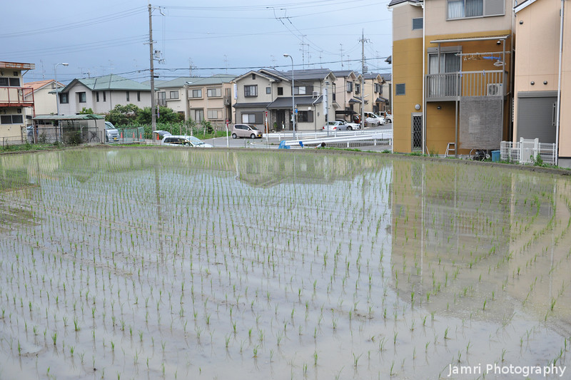 Rice Field in Suburbia.<br /> One of the cool things about Japan is how agriculture and suburbia can be mixed, actually I'd say there are no zoning laws in most parts of Japan.