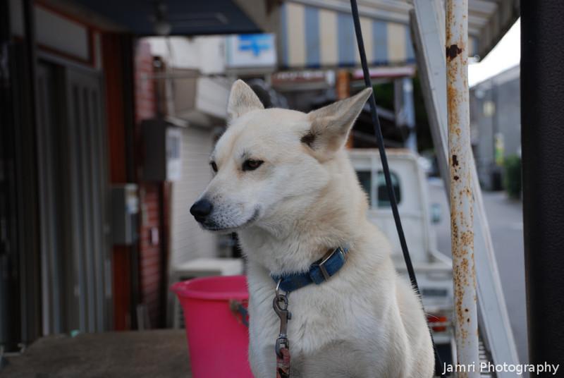 Friendly Dog.<br /> In Omi Hachiman, Shiga.