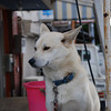 Friendly Dog.<br /> In Omi Hachiman, Shiga.