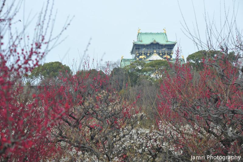Through the Ume.<br /> Osaka Castle.