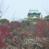 Through the Ume.<br /> Osaka Castle.