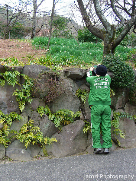 """Photographing Daffodils.<br /> Our friend """"Mr T."""" gets a shot of some daffodils during the hike."""