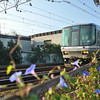 A Train and Morning Glories.