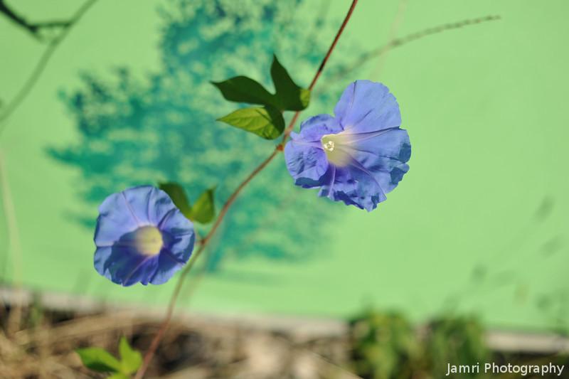 Blue Flowers on Green Backdrop.