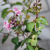 The Plant Blossoms.<br /> A plant our friend Bob Walker bought for us in June began to blossom.