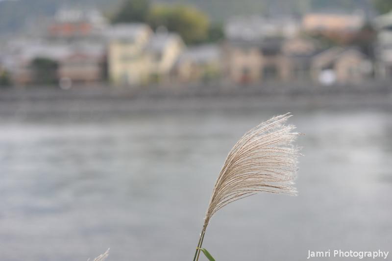 Along the Uji River.