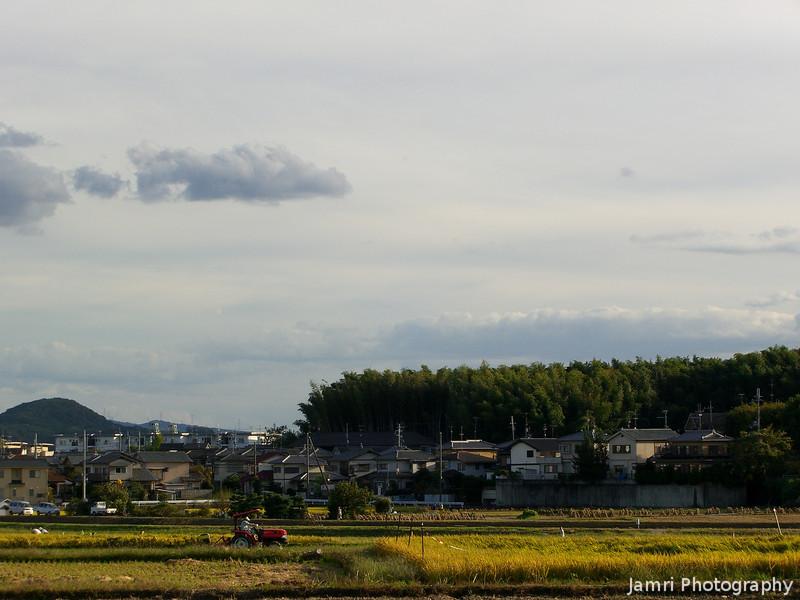 Harvesting in Nagaokakyo.