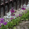Little flowers in a row.<br /> Sakura wasn't the only flower to see at this place in Fushimi.