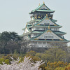 Sakura and Castle (Portrait View)<br /> Osaka Castle.