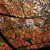 Autumn Beauty.<br /> At the Torokko Arashiyama Train Station.