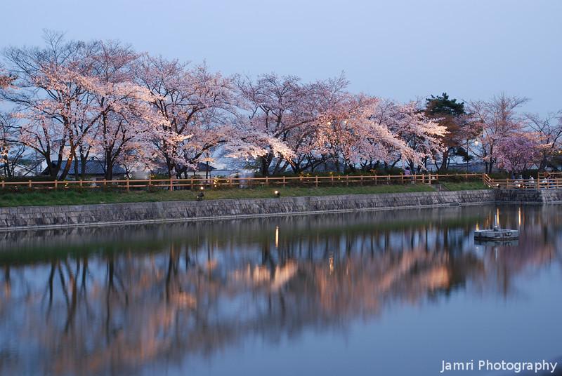 Lights along the shore.<br /> At the Nagaoka Tenmangu Shrine Park's Sakura Light Up.