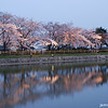 Lights along the shore.<br /> At the Nagaoka Tenmangu Shrine Park's Sakura Light Up.
