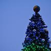 The top of the tree.<br /> At Bambio, Nagaokakyo.