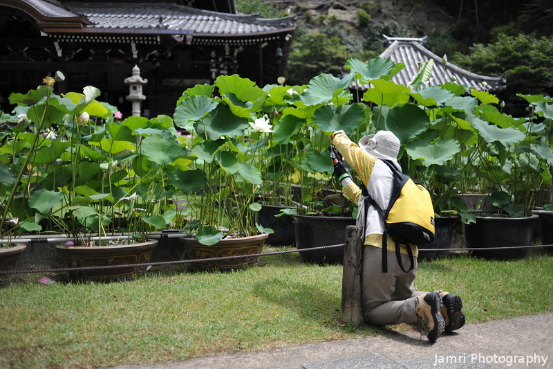 Getting a different angle.<br /> Of the Lotuses at Mimuroto-ji (a Buddhist Temple) near Uji, Kyoto.