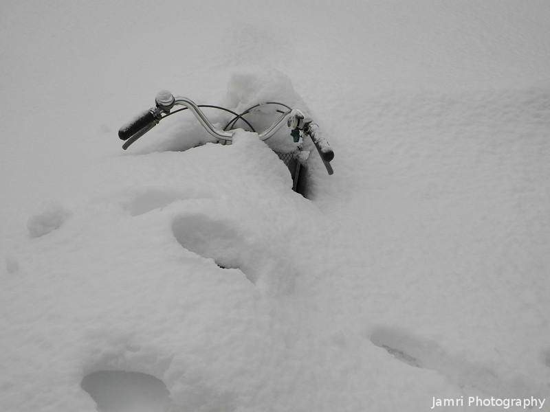 Snowed In Till Spring?