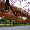 Maple Branch.<br /> Photo by Ritsuko.