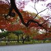 Maple Branch.<br /> Photo by Ritsuko.