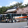 Snow and Sakura together.<br /> A once in 12 years occurrence in Kyoto.