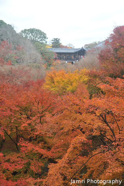 Big Red.<br /> Maples at Tofuku-ji.