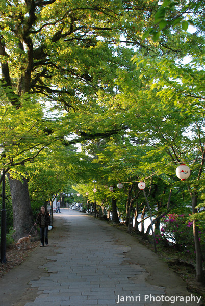Late Afternoon Path.<br /> Momiji (Japanese Maples) Trees in Spring