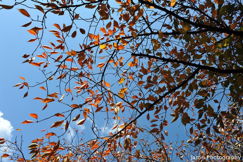 A bit of autumn colour.