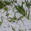 Grass and Snow.