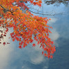 Maples and Sky Reflections.