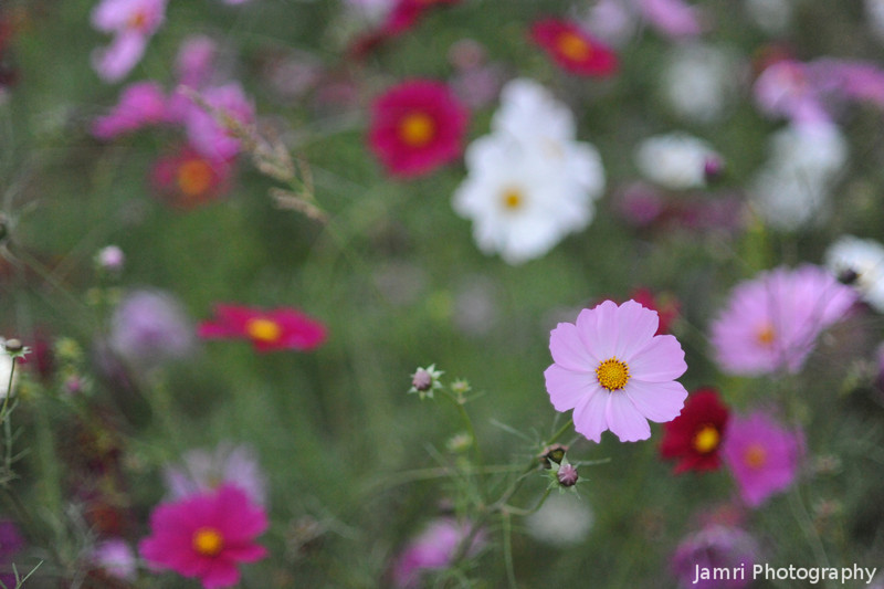 The colours of cosmos.