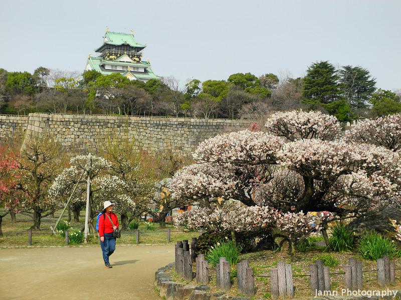 Observing the Ume.<br /> At Osaka Castle.