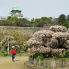 Observing the Ume.<br /> At Osaka Castle.