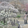 In amongst the Plums.<br /> In the grounds of Osaka Castle.