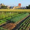 Vege Patch, Cosmos, and Rice Field.
