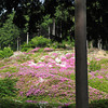 On last look towards the Azaleas.<br /> Before I had to leave, the place closes at 4:30pm!