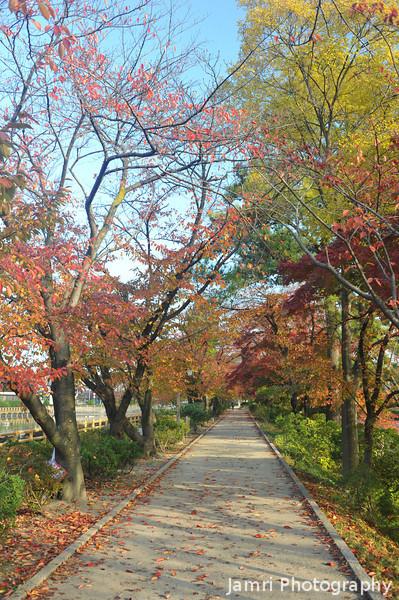 An Autumn Pathway.