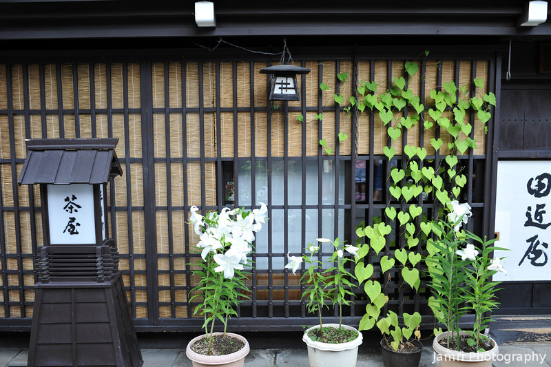 Traditional House and Summer Plants.