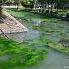 A Pond at Toji.<br /> Note Film Shot: Nikon F80 + Nikkor AF 35 f/2 + Circular Polariser + Fujicolor PRO400