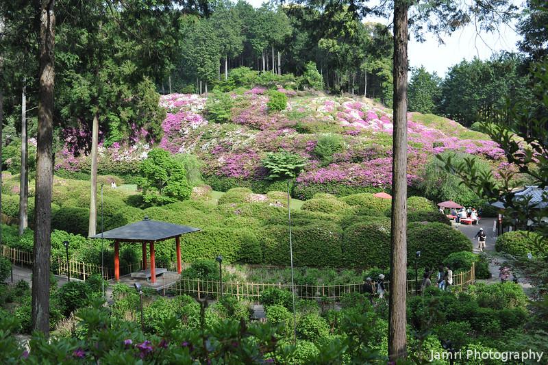 Azaleas at Mimoroto-ji.